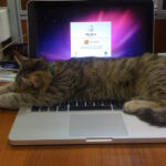 Cats Love Macs, too ;)