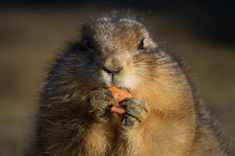 太らないお菓子の食べ方